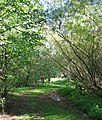 Leafy path at Queens Drive Meadows - geograph.org.uk - 256880.jpg