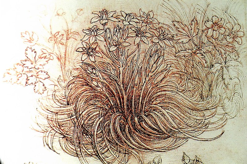 File:Leonardo, Blumen.JPG
