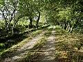 Letterpin Woods - geograph.org.uk - 329837.jpg