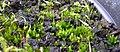 Lichen03 (16933401766).jpg