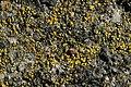 Lichen (39684931375).jpg