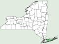 Ligusticum scoticum ssp scoticum NY-dist-map.png