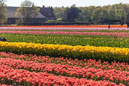 A typical Dutch landscape in South Holland Lisse, Netherlands - panoramio (44).jpg