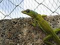 Lizard (6369695203).jpg