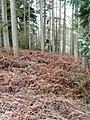 Llanstephan plantation - geograph.org.uk - 695482.jpg