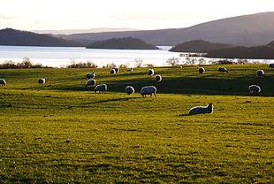Il Loch Lomond, il lago più grande del Regno Unito