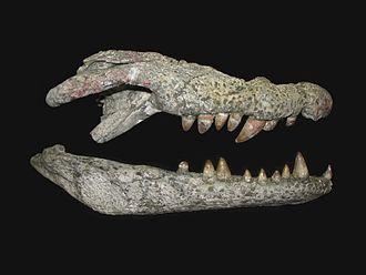 2015 in paleontology - Lohuecosuchus