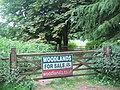 Longbeech Wood - geograph.org.uk - 1377101.jpg