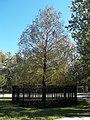 Longwood Senator Park Big clone01.jpg