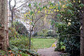 Looking south into the gardens in Montagu Square, London W1 - geograph.org.uk - 1610209.jpg