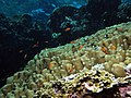 Looking up the reef, shallow take 7 (6158470509).jpg