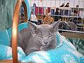 MTP Cat Show 2230017.JPG