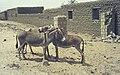 Mali1974-139 hg.jpg