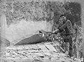 Man cutting down kauri tree (AM 86059-1).jpg
