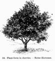 Manual of Gardening fig034.png