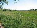Marsh pastures - geograph.org.uk - 1335052.jpg