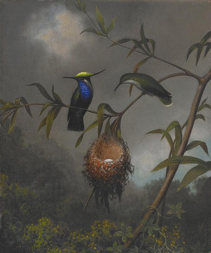 Martin Johnson Heade - Black-breasted Plovercrest - 2006.87 - Crystal Bridges Museum of American Art.jpg