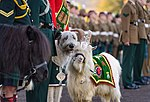Mascots on parade MOD 45162953.jpg
