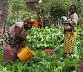 Maza Wanawake Kwanza Growers Association (7269688348).jpg