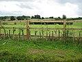 Mended fences - geograph.org.uk - 912582.jpg
