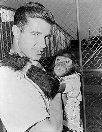 Enos (chimpanzee) - Enos with handler