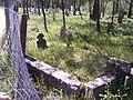 Mestan TAŞKIRAN'ın mezarı - panoramio.jpg
