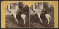 Miss Lizzie Smith of Canajoharie and her horse Cricket (23 years old), by Meske, Gilman & Rawson, ca. 1860s - 1870s.png