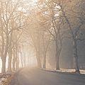 Misty avenue.jpg