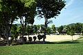 Mitachi Kotu Park 03.jpg
