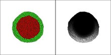 File:Modeling-Gastrulation-in-the-Chick-Embryo-Formation-of-the-Primitive-Streak-pone.0010571.s003.ogv