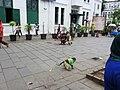 Monkey being exploited - panoramio.jpg