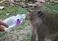 Monkeys!!! (6042492977).jpg