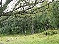 Morrone Birkwood - geograph.org.uk - 44087.jpg