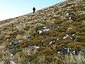 Mossy boulder field, Meall nan Oighreag - geograph.org.uk - 623566.jpg