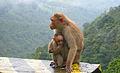Mothers love (6175325761).jpg