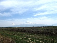 Mount Ararat with Black Kite flying past.jpg