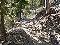 Mount Charleston South Loop trail 1.jpg
