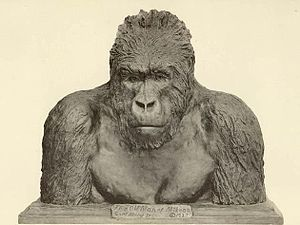 "Carl Akeley - ""The Old Man of Mikeno"", bronze bust of a mountain gorilla by Carl Akeley"
