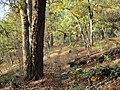 Mule Mountain Trail - panoramio.jpg