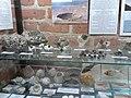 Muzeum Kamieni w Kamieniu Pomorskim - lipiec 2018 - 2.jpg
