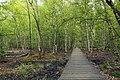 National nature reserve Soos in spring 2015 (3).JPG