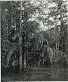 Natural history (1919) (14595155869).jpg