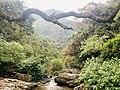 Natural water stream.jpg