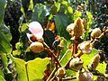 Nature at Caracas (25).jpg