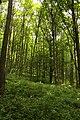 Nature reserve Žižkův vrch in summer 2012 (11).JPG
