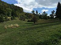 Naturschutzgebiet Bürgle Jungingen 04.JPG