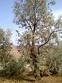 Navidhand new 302 - panoramio.jpg