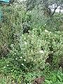 Nesher, Park Nesher, Wadi Katia 073.JPG