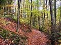 Niederaußem Waldweg.JPG