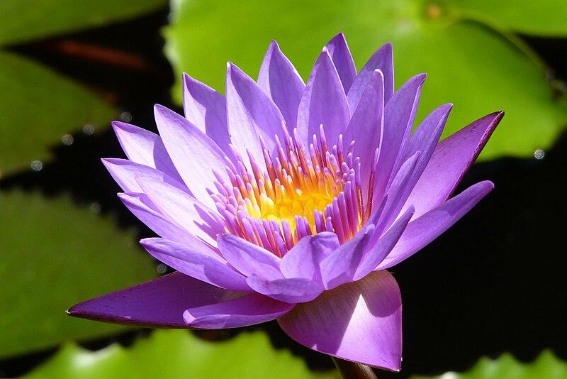 Flora The Wellness Spa Noida Uttar Pradesh